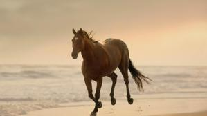 Strongbow Slow Motion Horse
