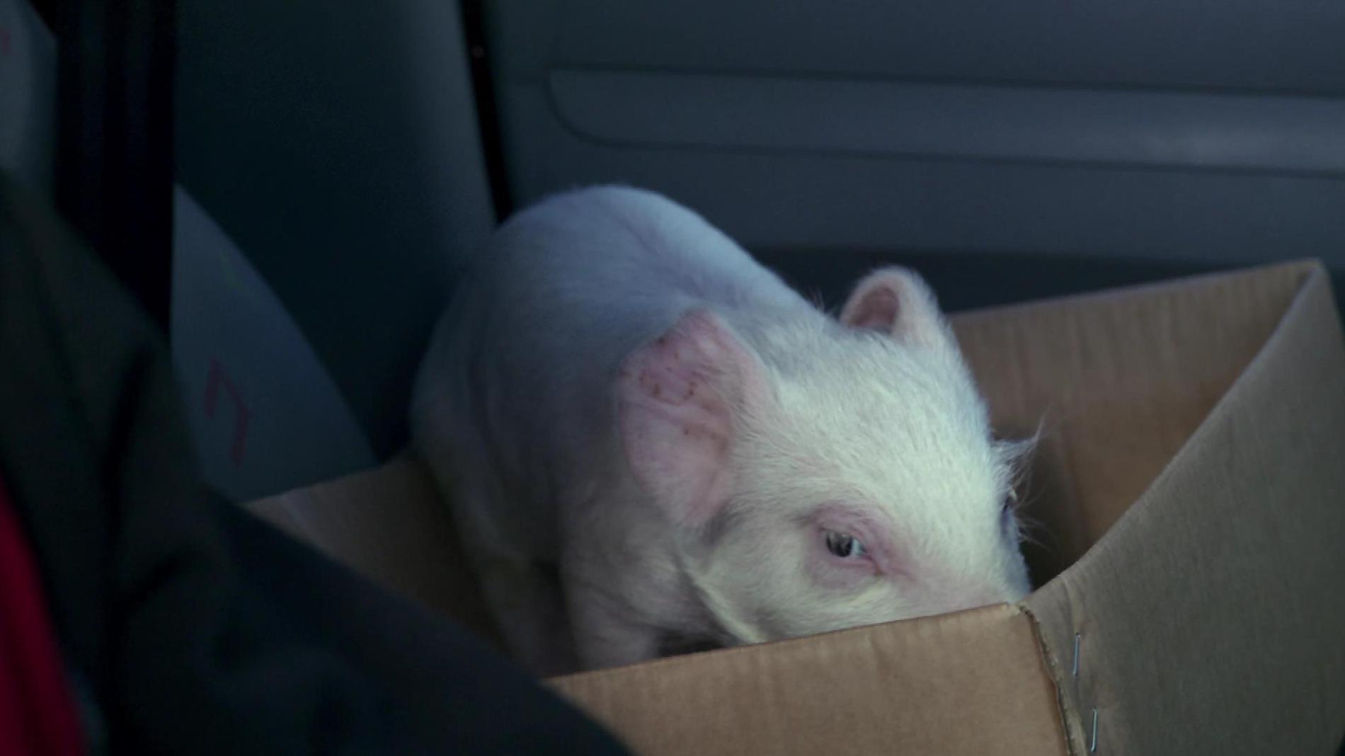 Piggy back for the Irish market
