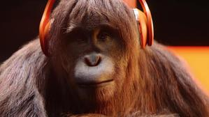Audible Orangutan