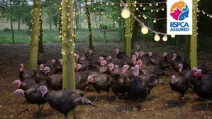 RSPCA Turkeys